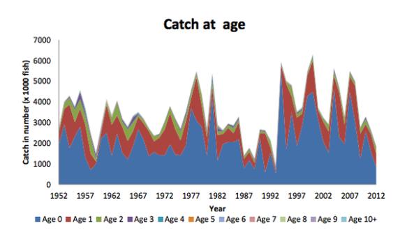 1952 至 2012 年每年捕獲的太平洋藍鰭吞拿魚歲數 Credit: 國際北太平洋鮪魚科學委員會